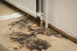 Stay Healthy Indoors with Black Mold Removal