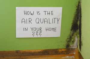 Do You Need Mold Cleanup? Indoor Symptoms to Watch Out For