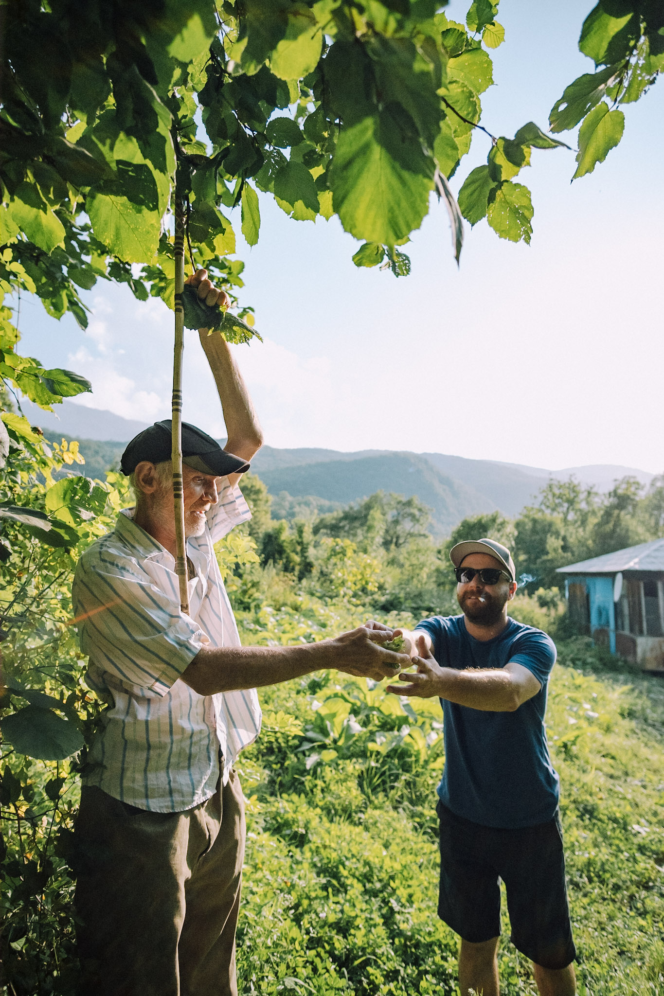 Paata passes a handful of freshly picked hazelnuts to his son, Dimitri Mais