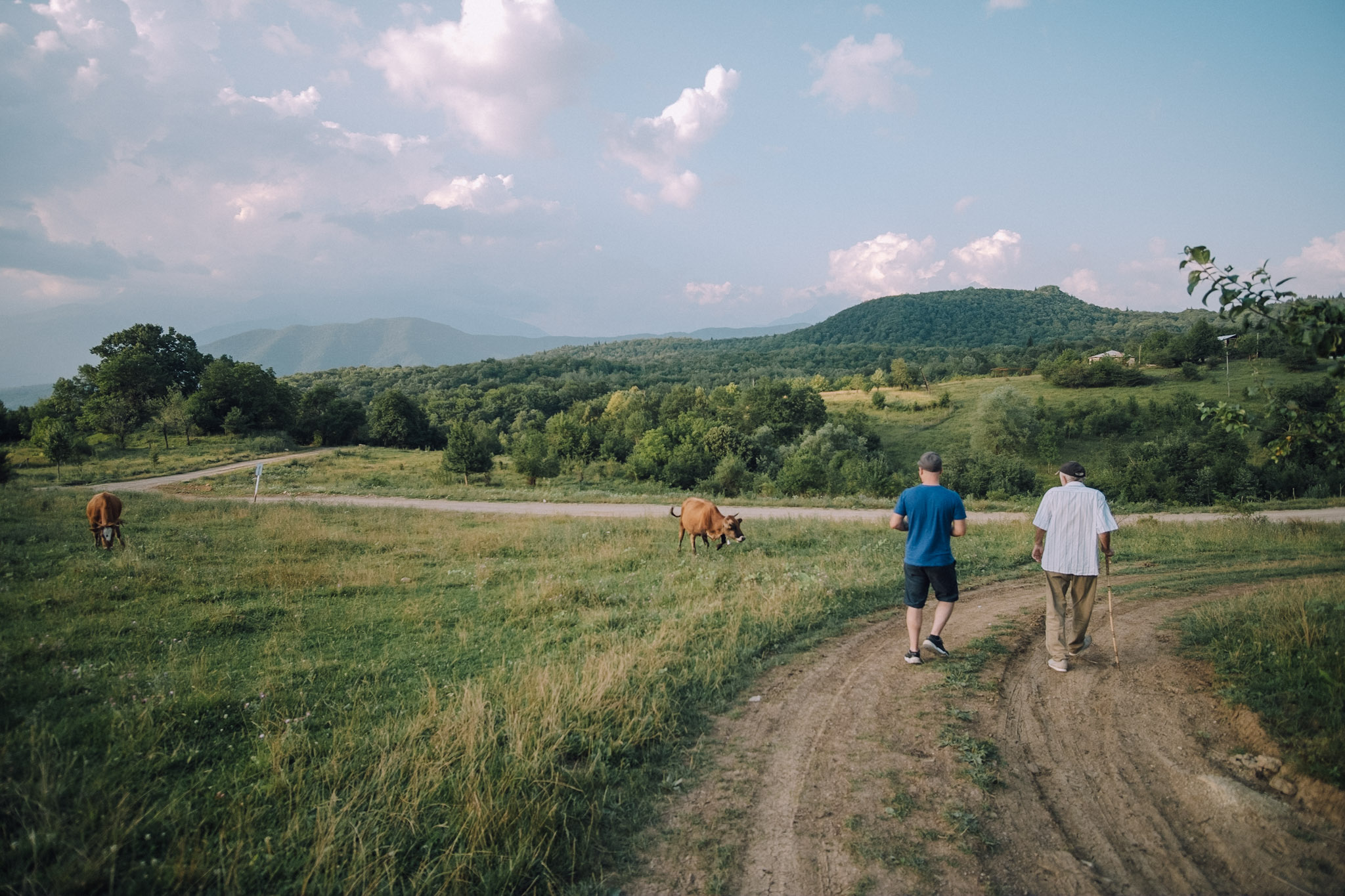 Dimitri Mais and his father, Paata, walk on a dirt road past grazing cows under a blue but cloudy sky