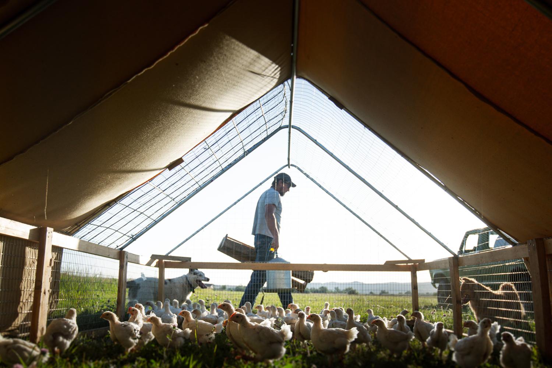 Craig Okraska's favorite image of a farmer and his turkeys
