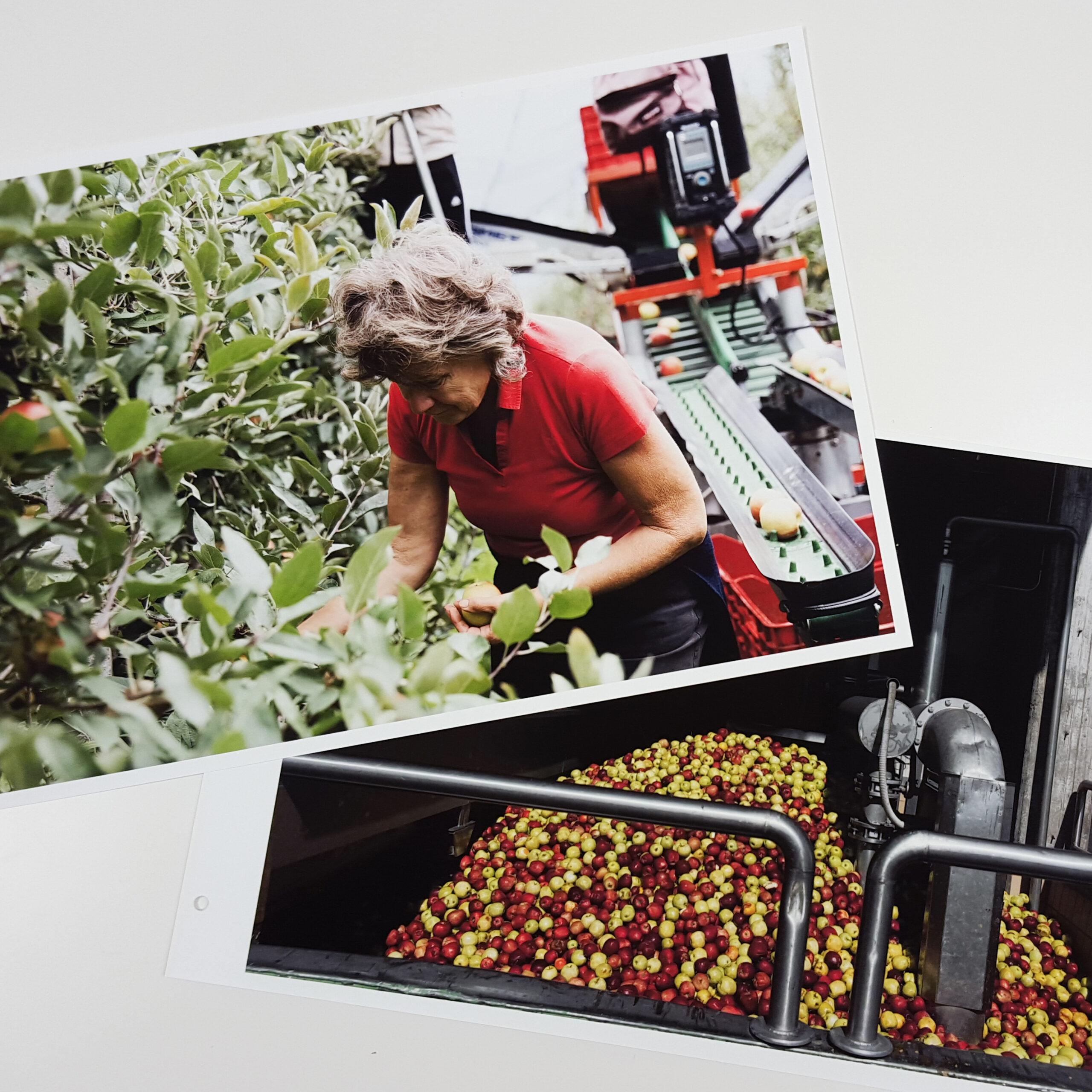 Print Portfolio Production: Eva Deitch