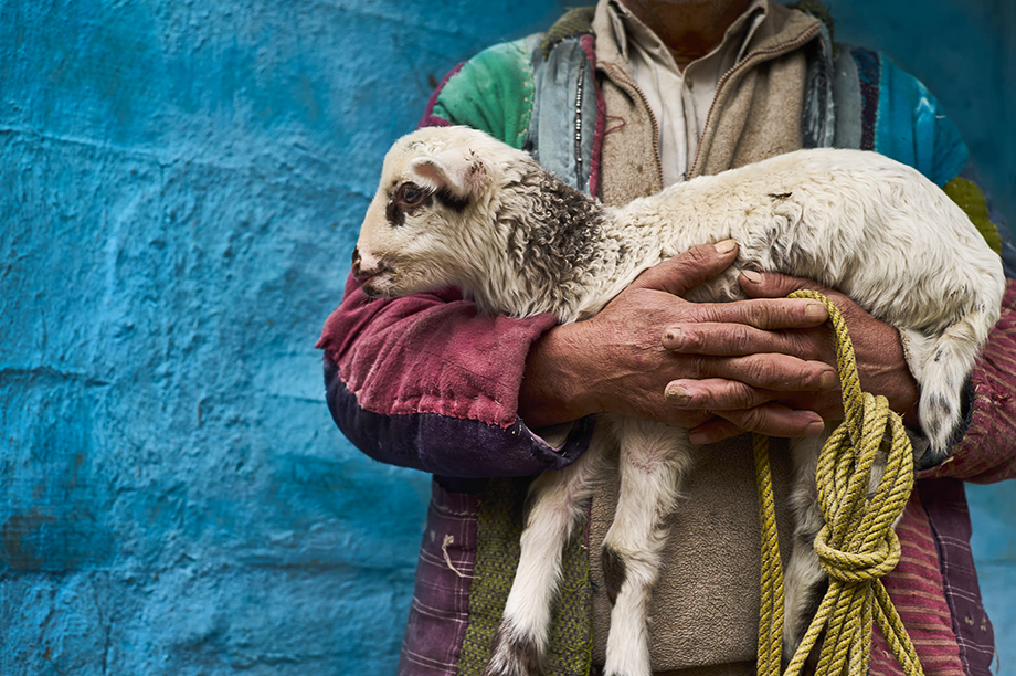 Mark Katzman's Real and Raw Travels through India for FES - Man carrying a sheep and rope.