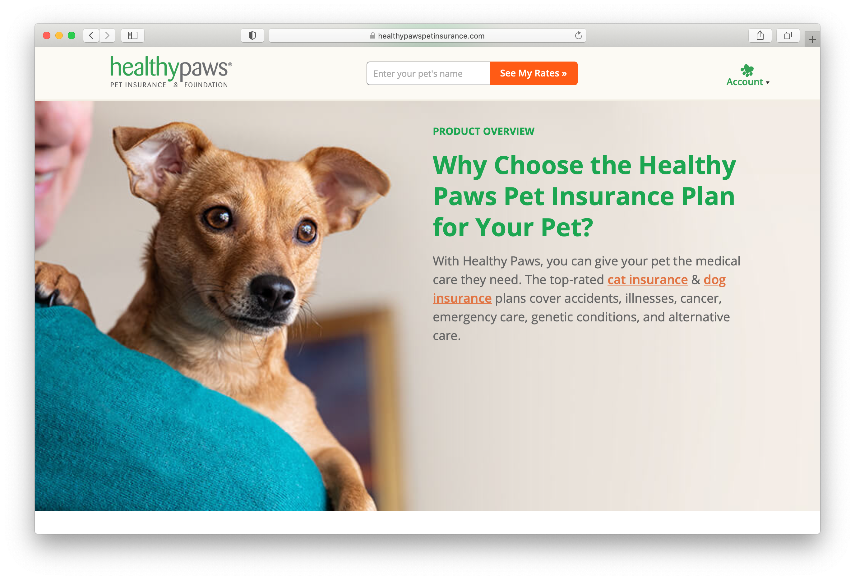 Mark Rogers photo of a cheerful pup on a womans shoulder on the homepage of Healthy Paws