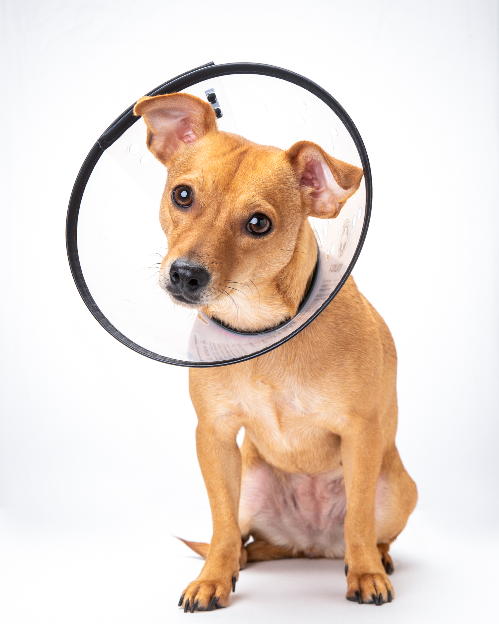 Mark Rogers photographs a sweet puppy in a cone of shame for Healthy Paws Pet Insurance