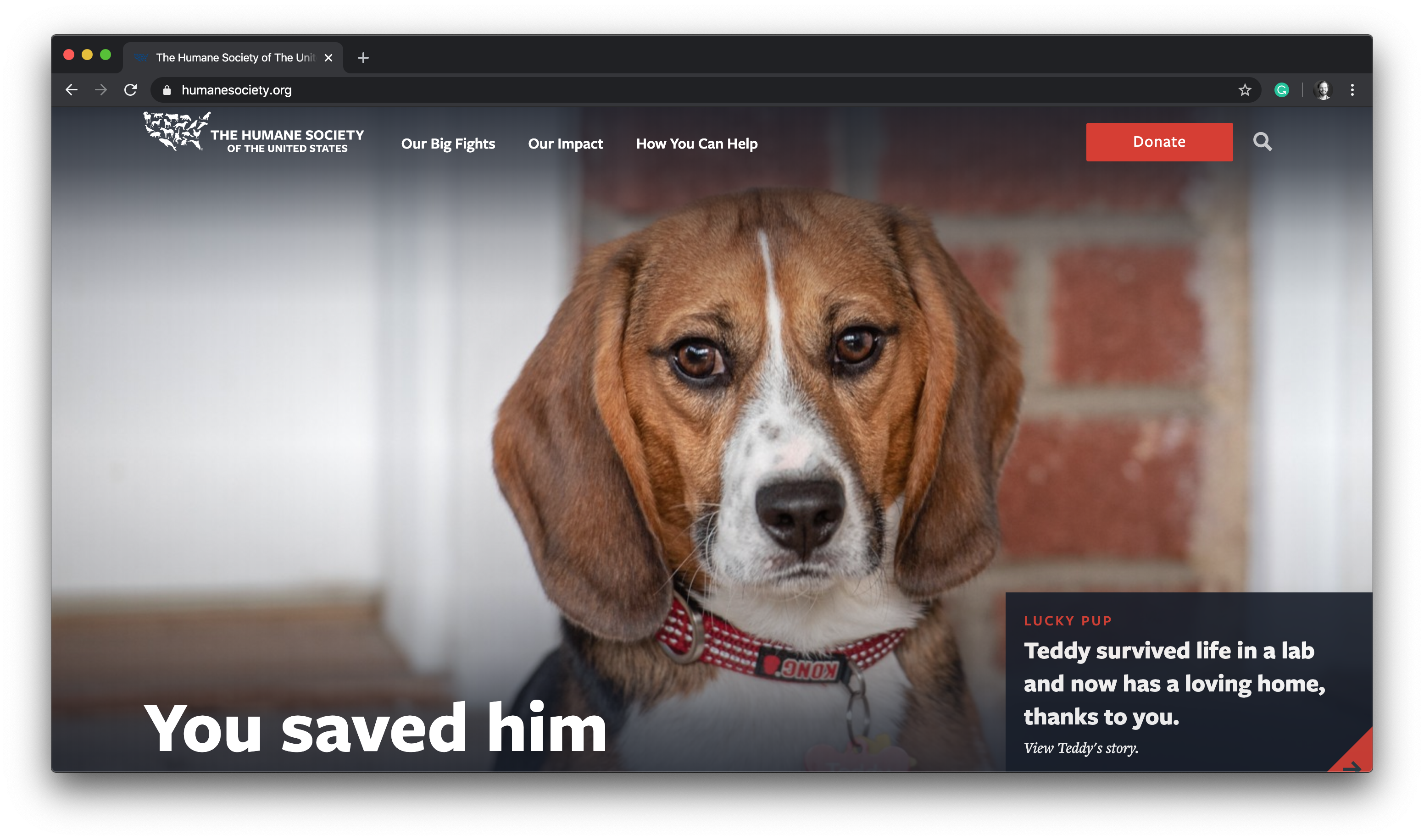 humane society of the united states website homepage screenshot teddy