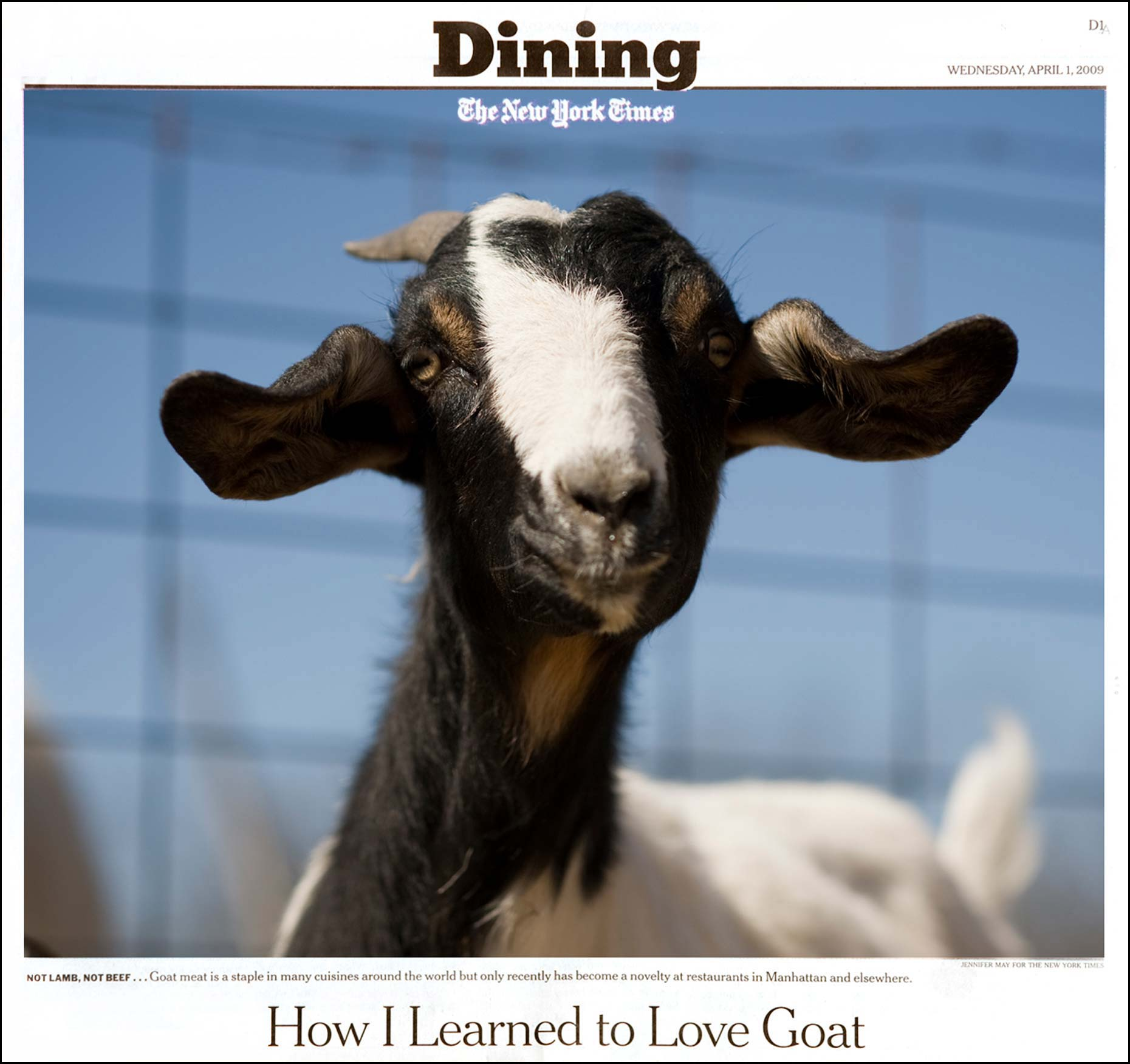 agriculture photography Tearsheet of Jennifer May's image of a goat for the New York Times
