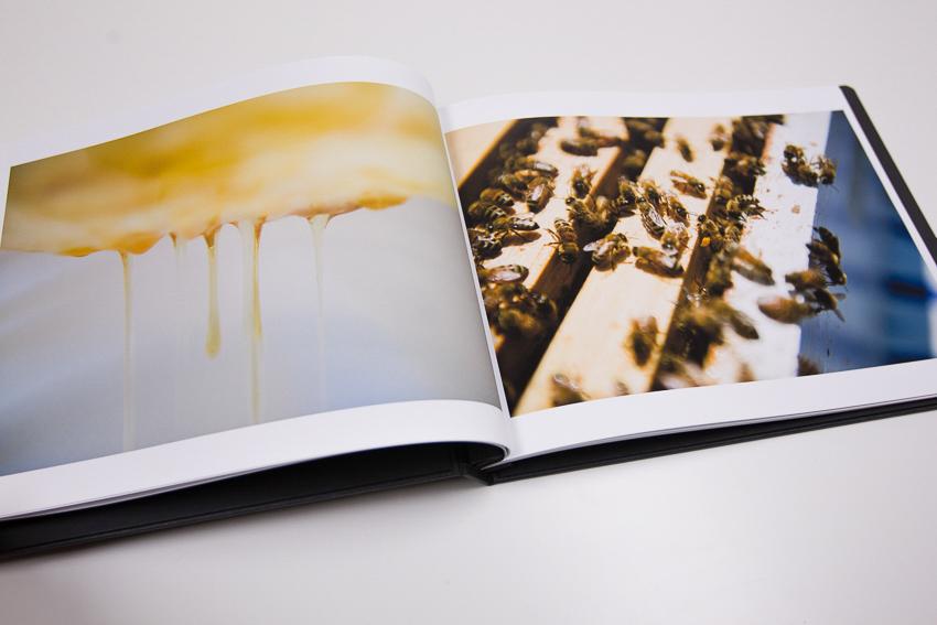 Honey and bee photos in Lauren V. Allen's portfolio edited by Molly Glynn