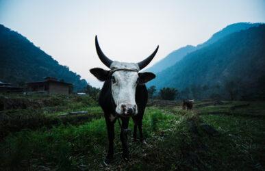 Michael Marquand Southern Bhutan 009