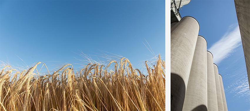 Grain and elevators by John Valls