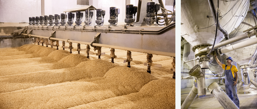 Industrial barley manufacturing and processing by John Valls