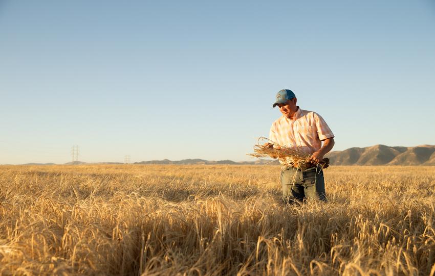 Farmer at a barley field shot by John Valls