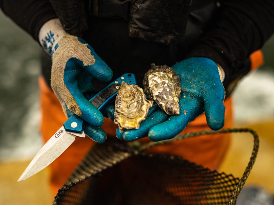 Oysters and knife in hand shot by Ed Sozhino for Case Knives