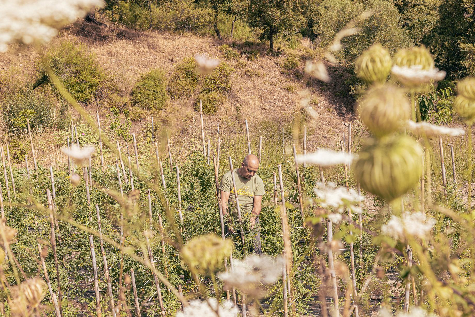 Lollovers inn vegetable garden, Pietro Tolu at work shot by Alberto Bernasconi for Enjoy magazine