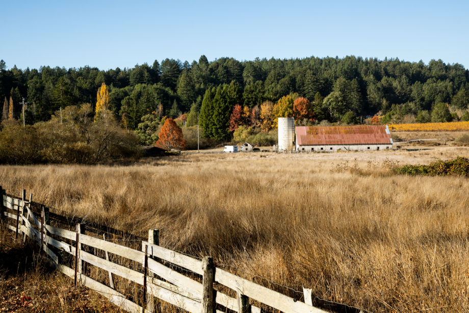 A grassy farm in fall shot by Angela DeCenzo for National Geographic Traveller Food magazine