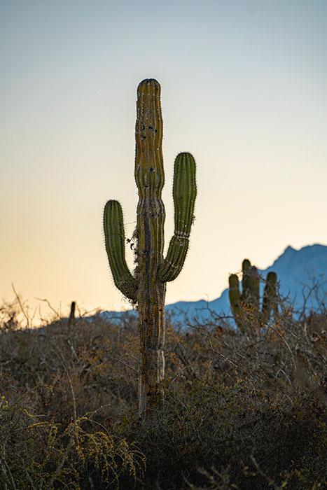 Baja California, Mexico. Photography by Dalton Johnson.