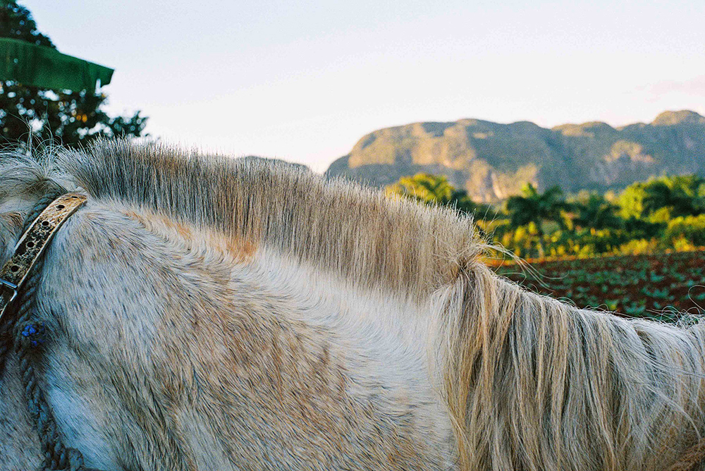 Photographer Dan Bigelow Creative in Place: Life on the Ranch