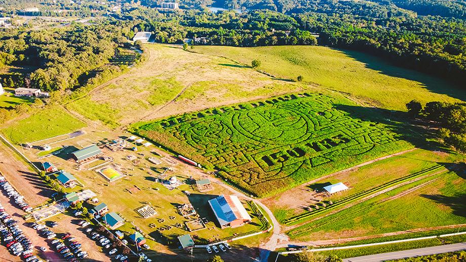 A drone shot of Denver Down's 150th anniversary corn maze.
