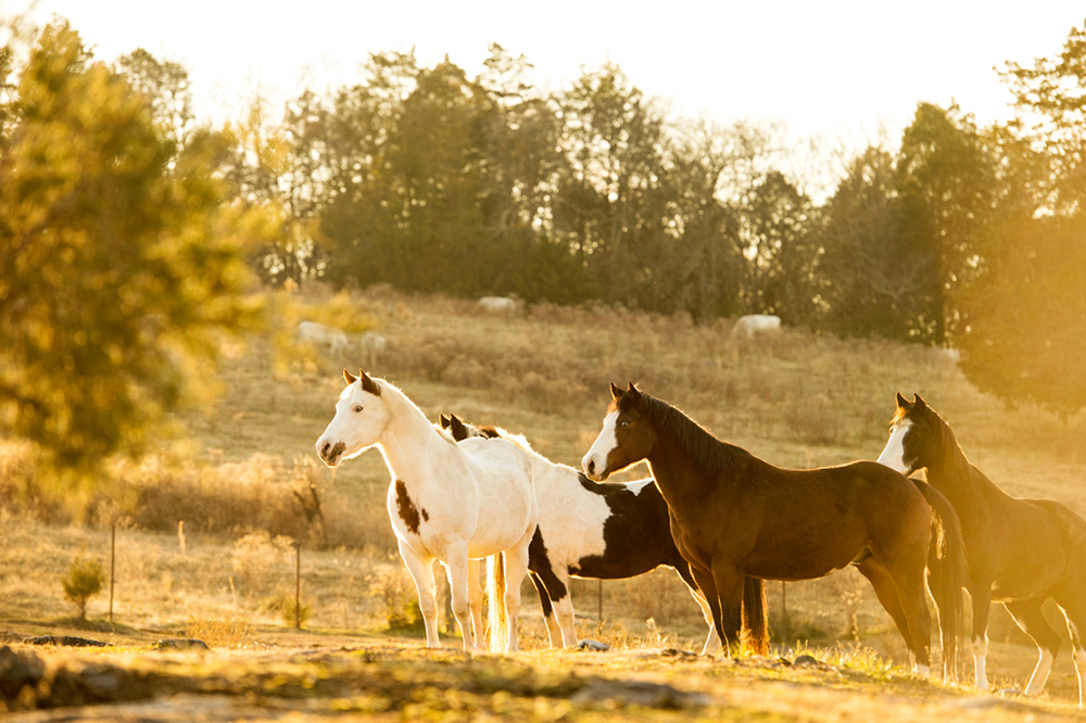 Photographer Jackie Osborne Creative in Place: Life on the Ranch
