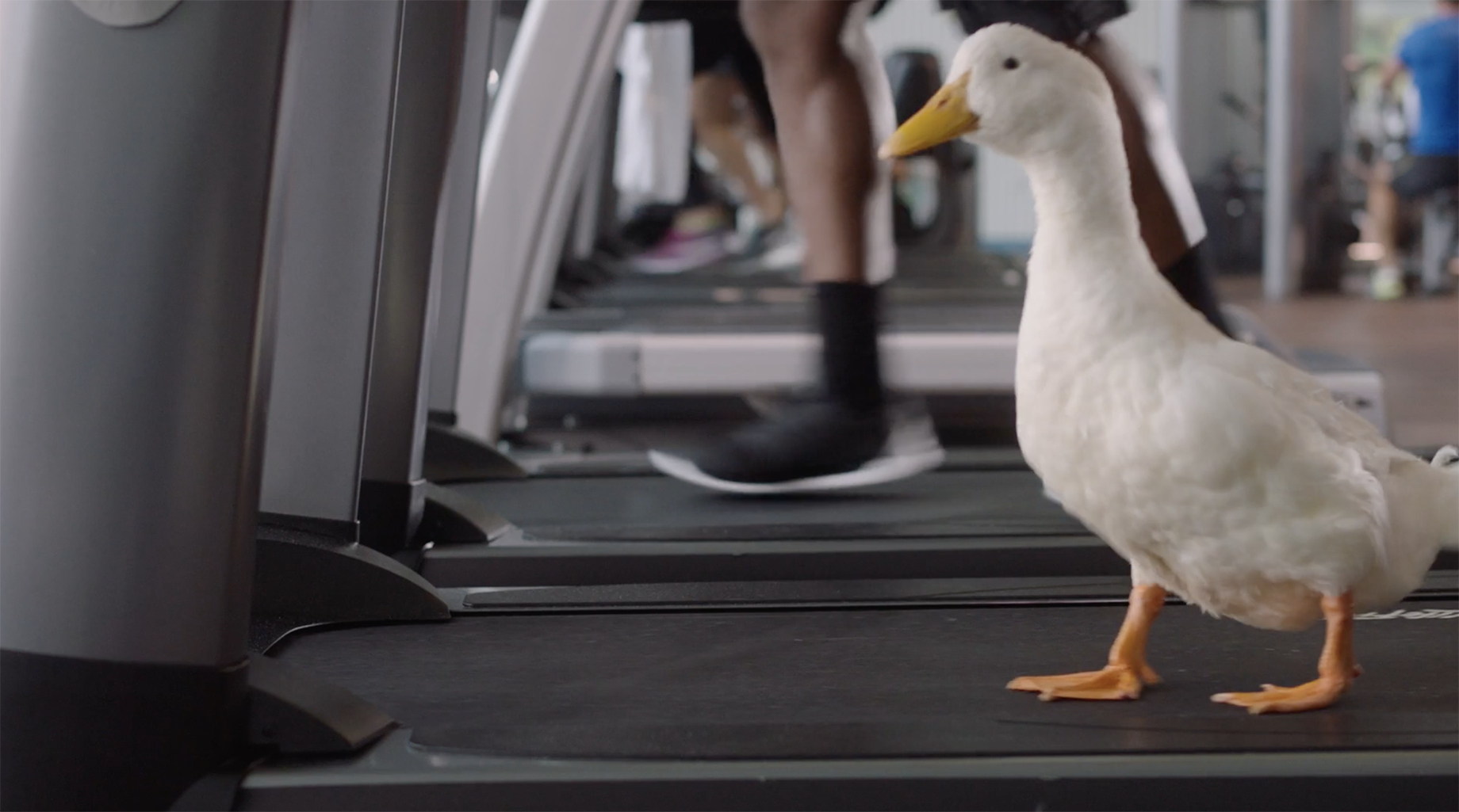 A still from John Fulton's commercial with the Aflac duck.