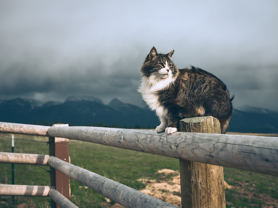 A cat on the ranch. Photography by Kody Kohlman