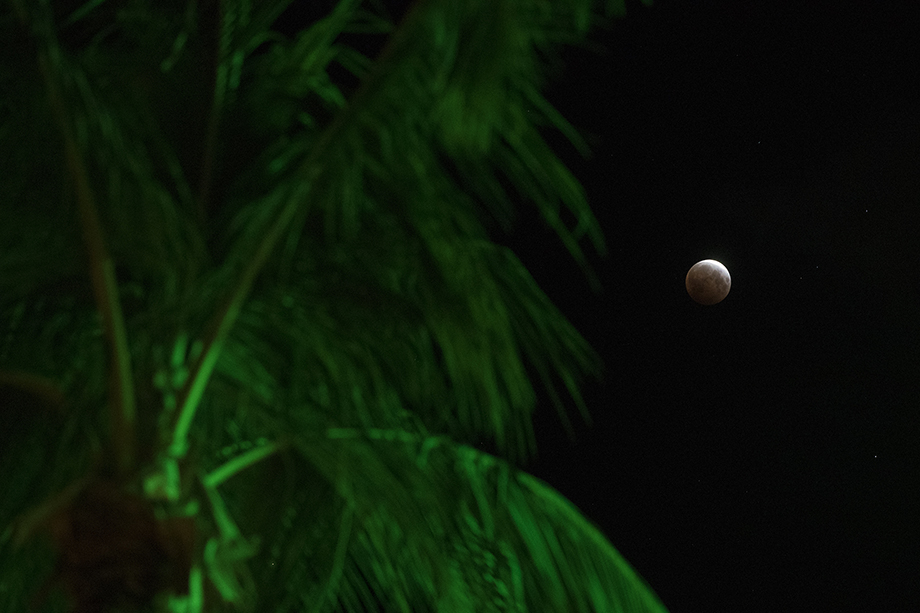 The super flower blood moon next seen through a set of palm trees located near Aloha Towers. Photography by Marco Garcia for Reuters.