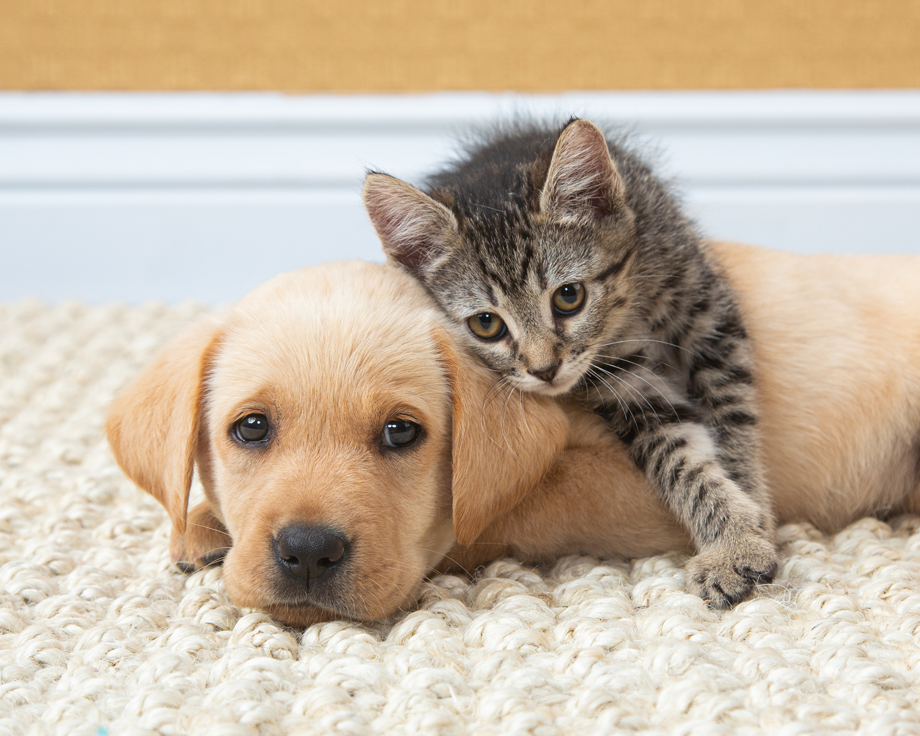 Puppy and kitten image photographed by Mark Rodgers.