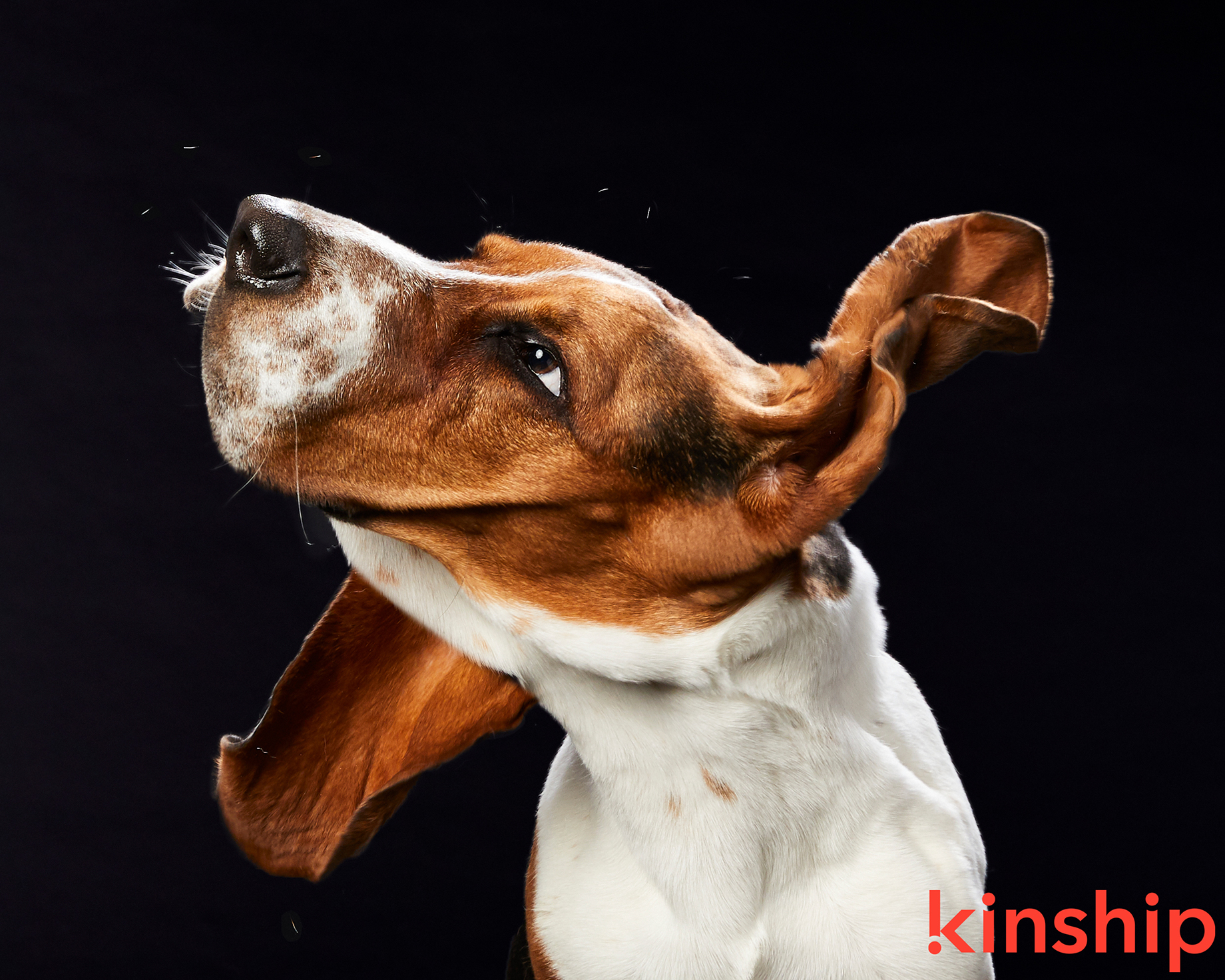 Dog photographed by Mark Rodgers for Kinship.