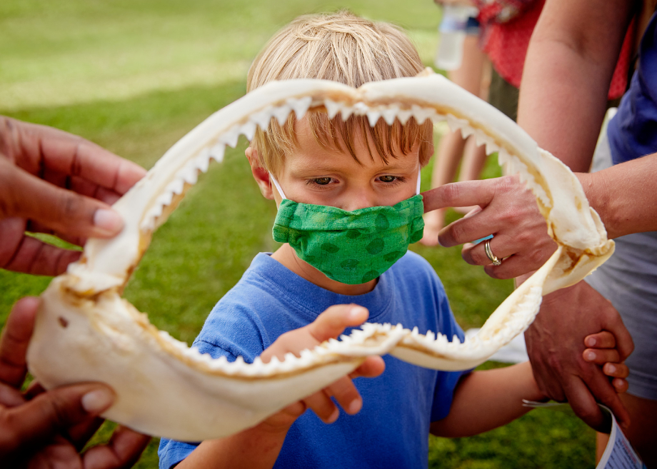 """Child examining a small shark jaw bone for """"My Former Future Self"""""""