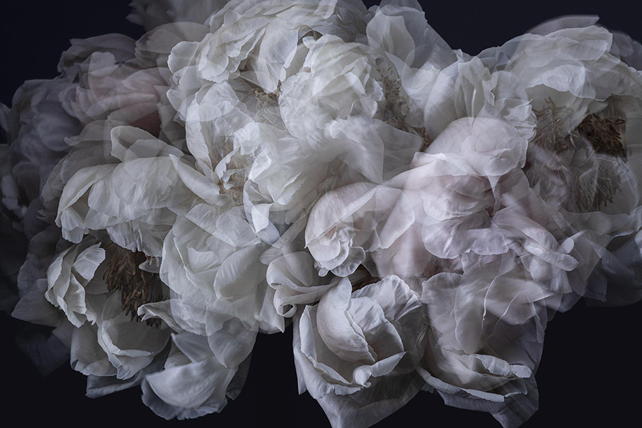 Delicate flower petals give the illusion of tulle. Photographed by Richard Boll.
