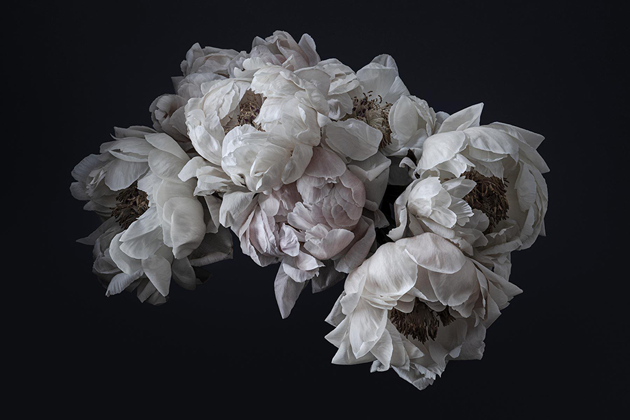 An arrangement of Peonies photographed by Richard Boll.