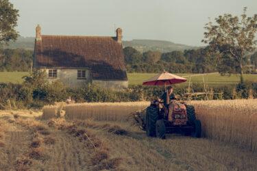 Matravers Thatchers Harvesting Wheat 0001