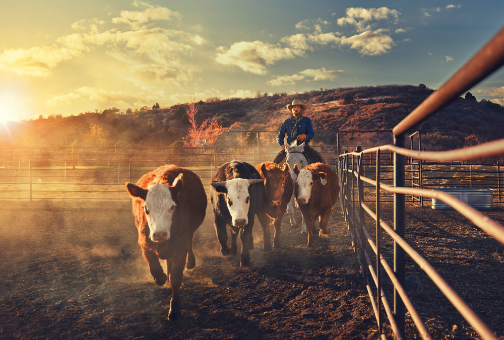 Photographer Willie Petersen  Creative in Place: Life on the Ranch