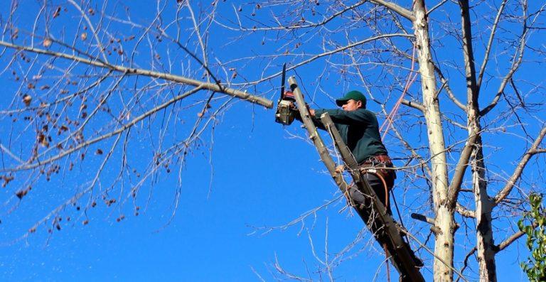 Tree Service Porters WI