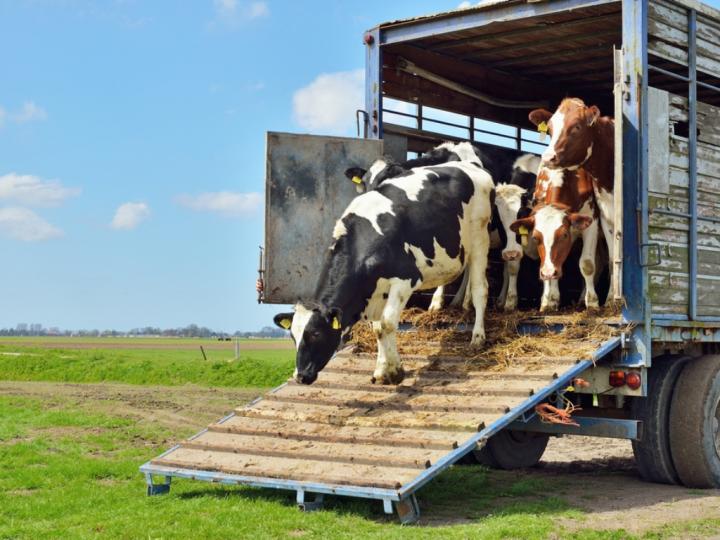 Transporte de carga viva: tudo que você precisa saber