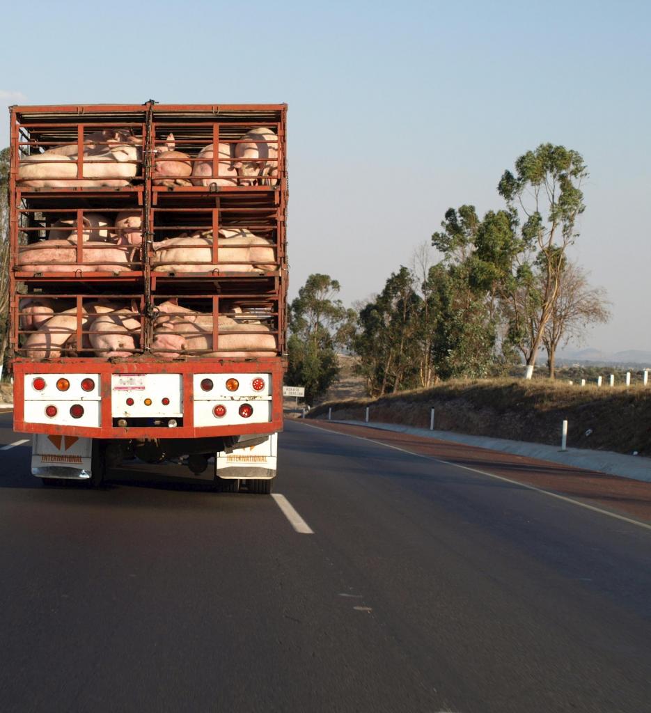 Mais dicas para um transporte de carga viva seguro