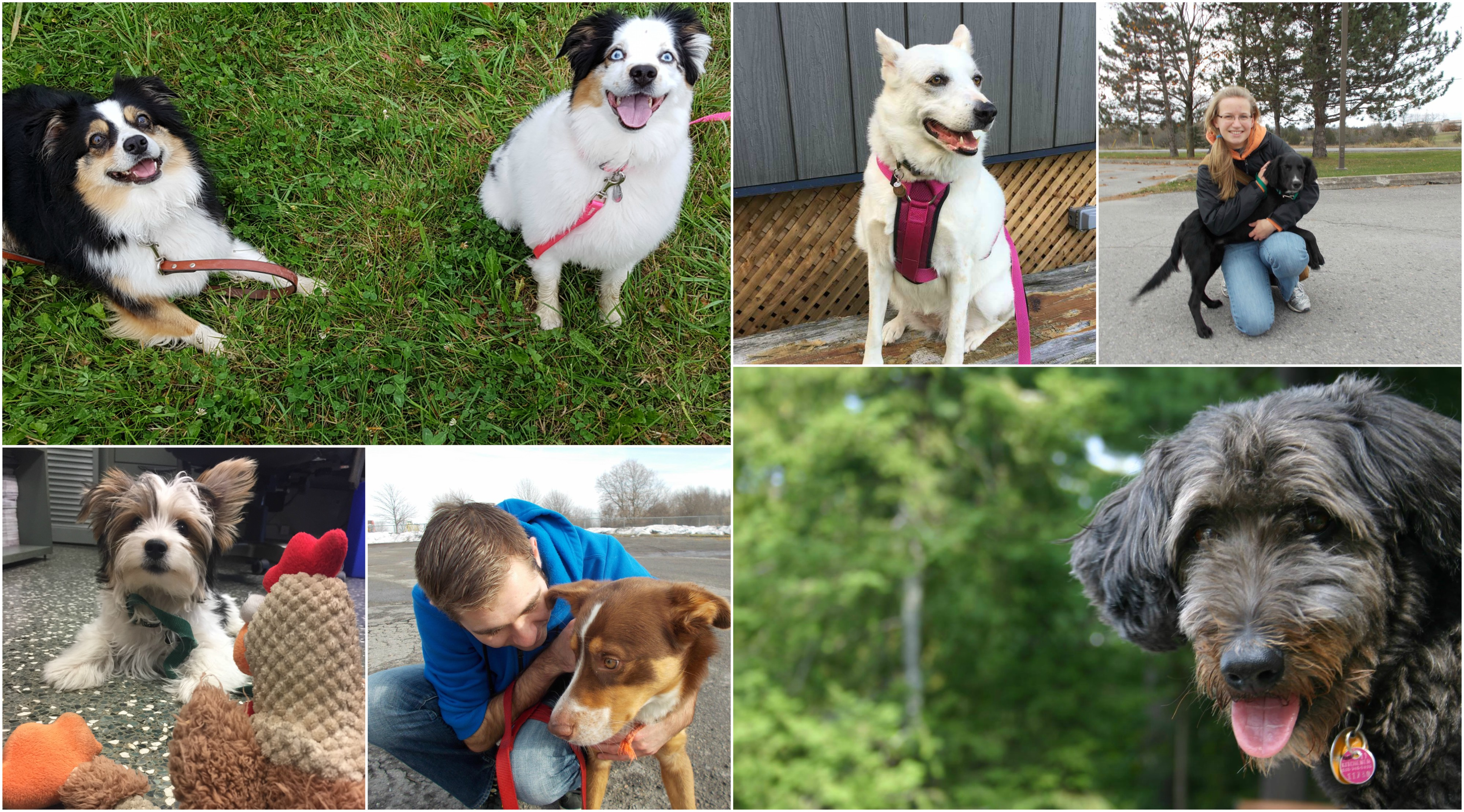CLV Group_Places to Adopt a Shelter Pet Near your CLV Group Apartment_Pet Friendly Apartments_Collage