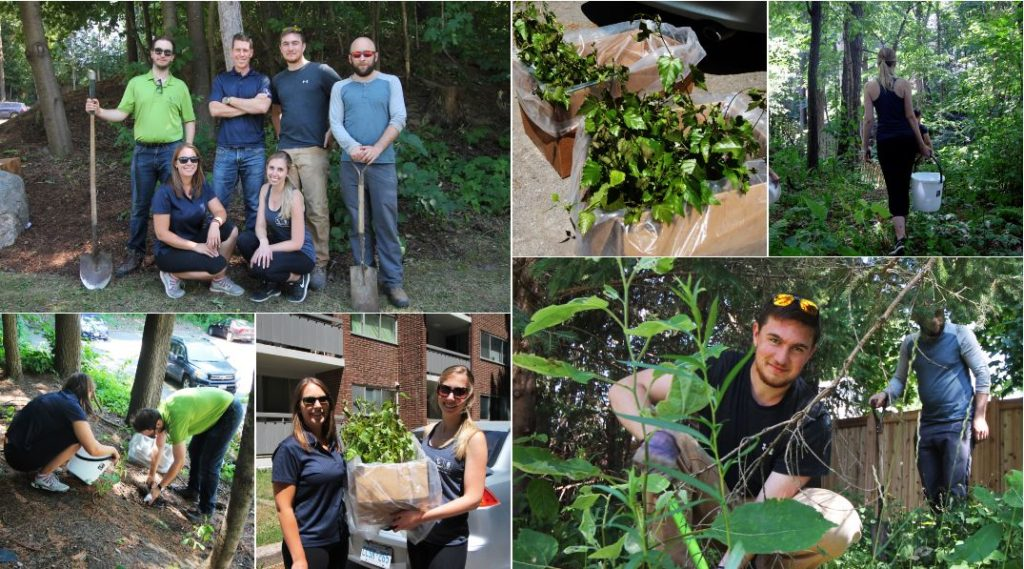 Collage - LiV Apartments - CLV Group - Tree Planting