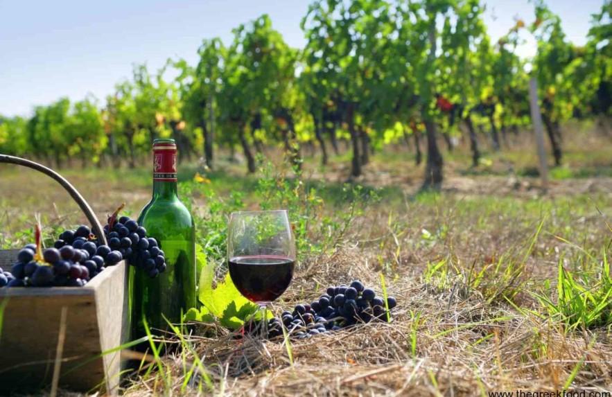 Rota do vinho na Serra Gaúcha