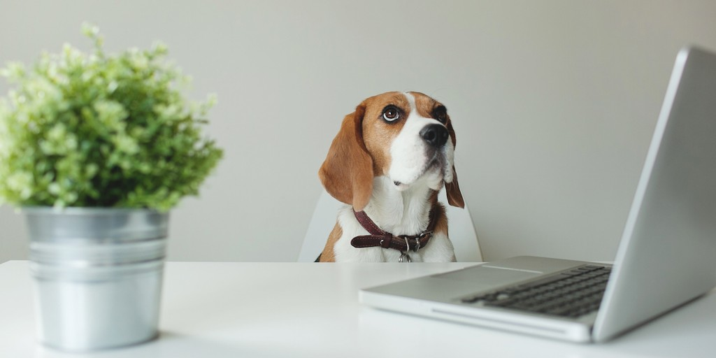 Should You Bring Your Dog to Work With You?