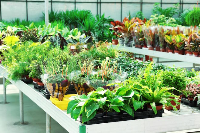 How You Can Bring Nature Indoors With You at Work