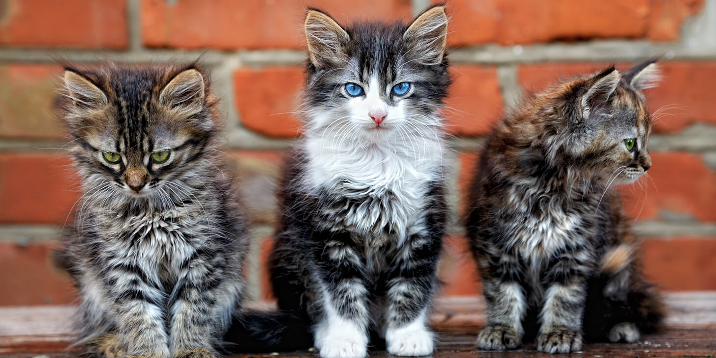 5 Valuable Reminders For Project Managers Who Herd Creative Cats