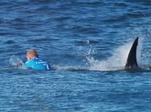 Famous Surfer Fights Off Shark