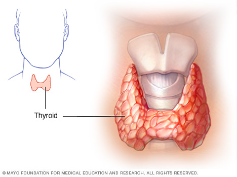 Just What Do you Know About Your Thyroid Gland?