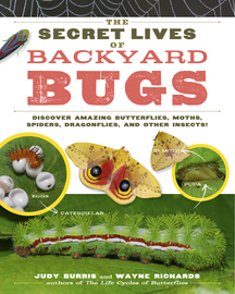 The Secret Lives of Backyard Bugs - cover