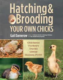 Hatching & Brooding Your Own Chicks - cover