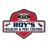Roy's Wildlife and Pest Control