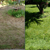 Aerating & Thatching Co. - Core Aeration in Seattle, WA - Gallery Photo 2