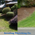 Aerating & Thatching Co. - Core Aeration in Seattle, WA - Gallery Photo 4