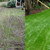 Aerating & Thatching Co. - Core Aeration in Seattle, WA - Gallery Photo 5